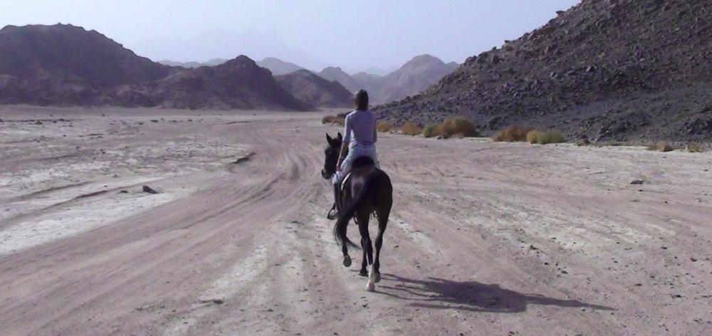 Конные прогулки в горы из Хургады