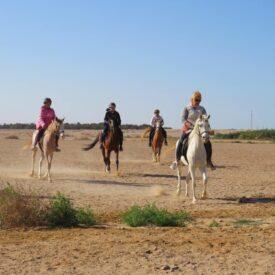 Конные прогулки из Хургады