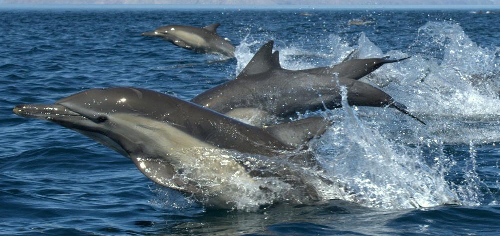 Экскурсия в Дом Дельфинов в Хургаде
