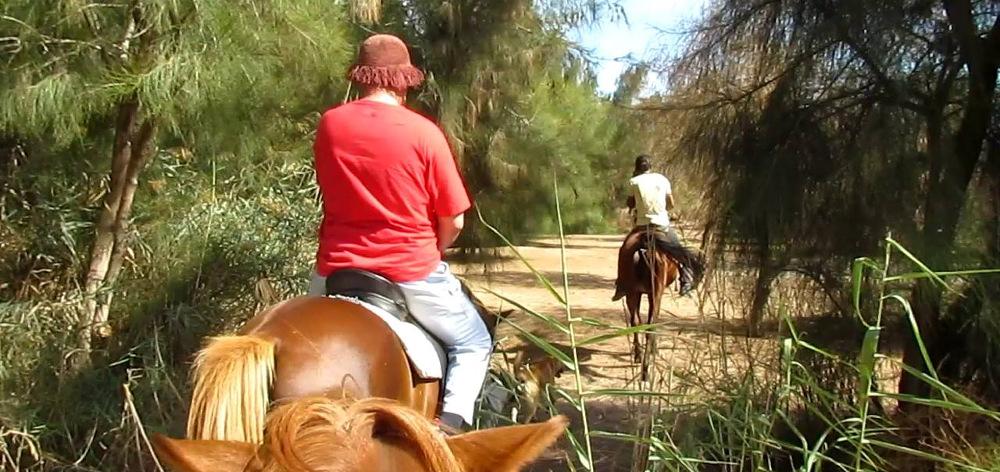 Конные прогулки в лес в Хургаде