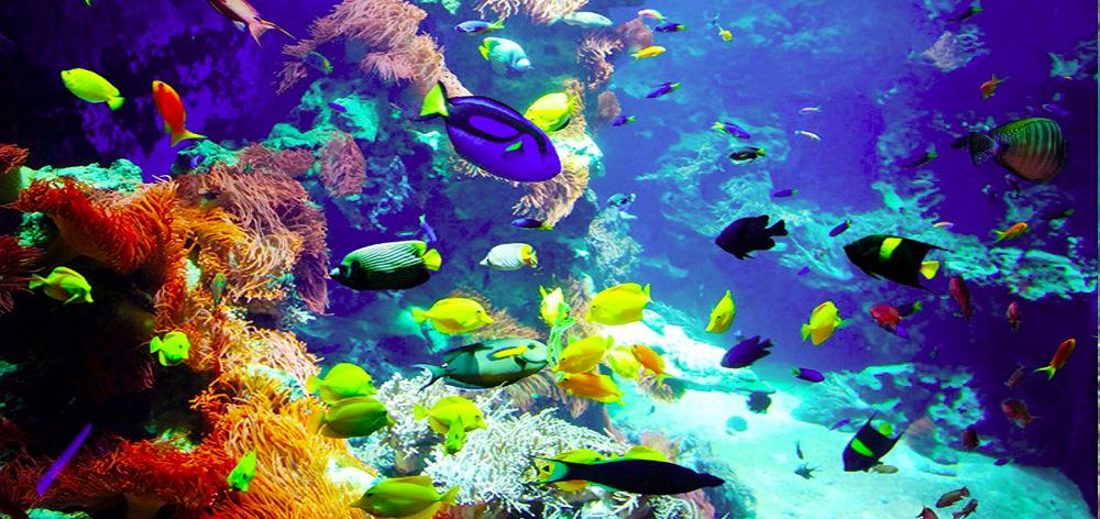 Посещение кораллового заповедника Шарм Эль Нага из Хургады