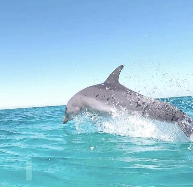 Дом дельфинов из Хургады