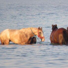 Конные прогулки в море из Хургады