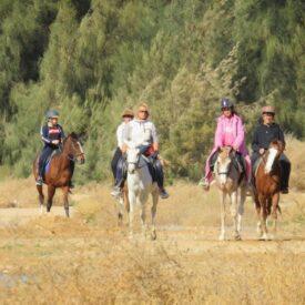 Конные прогулки в лес из Хургады